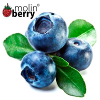 MOLINBERRY BLUEBERRY AROM